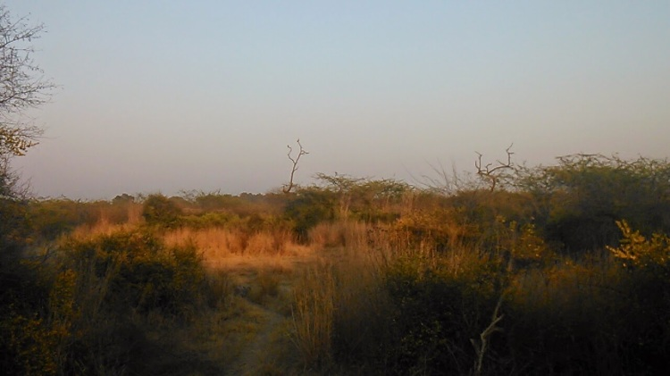 Bharatpur bird sightings - often far