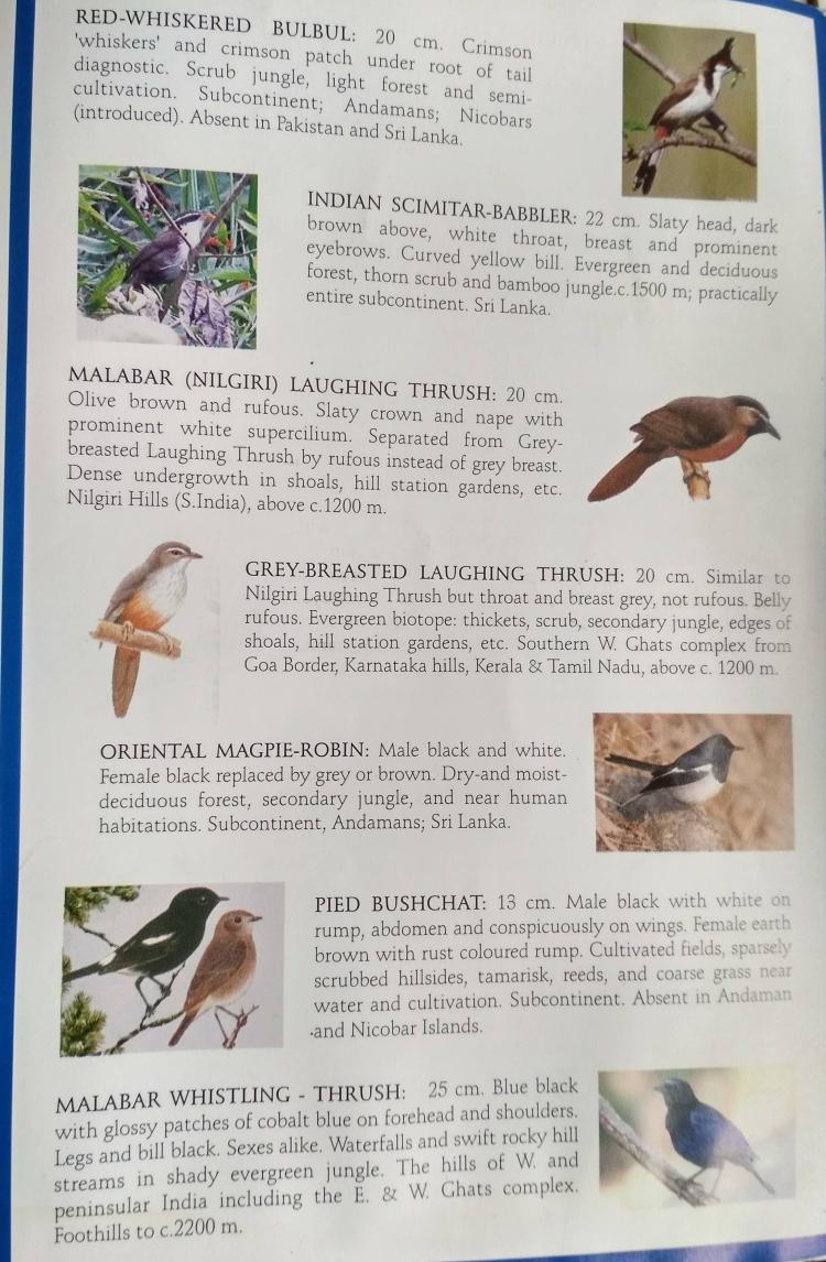 birding-book-munnar-inside.jpg