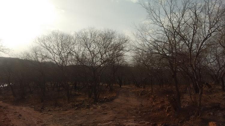 Hot and Dry...hardly any tree cover