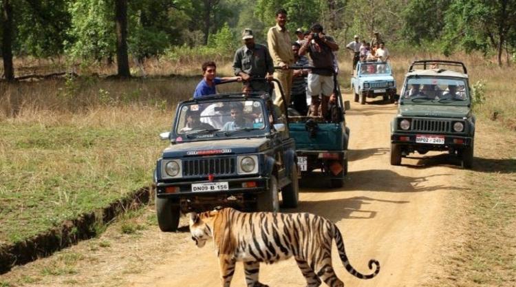 Jeep Safari.jpg