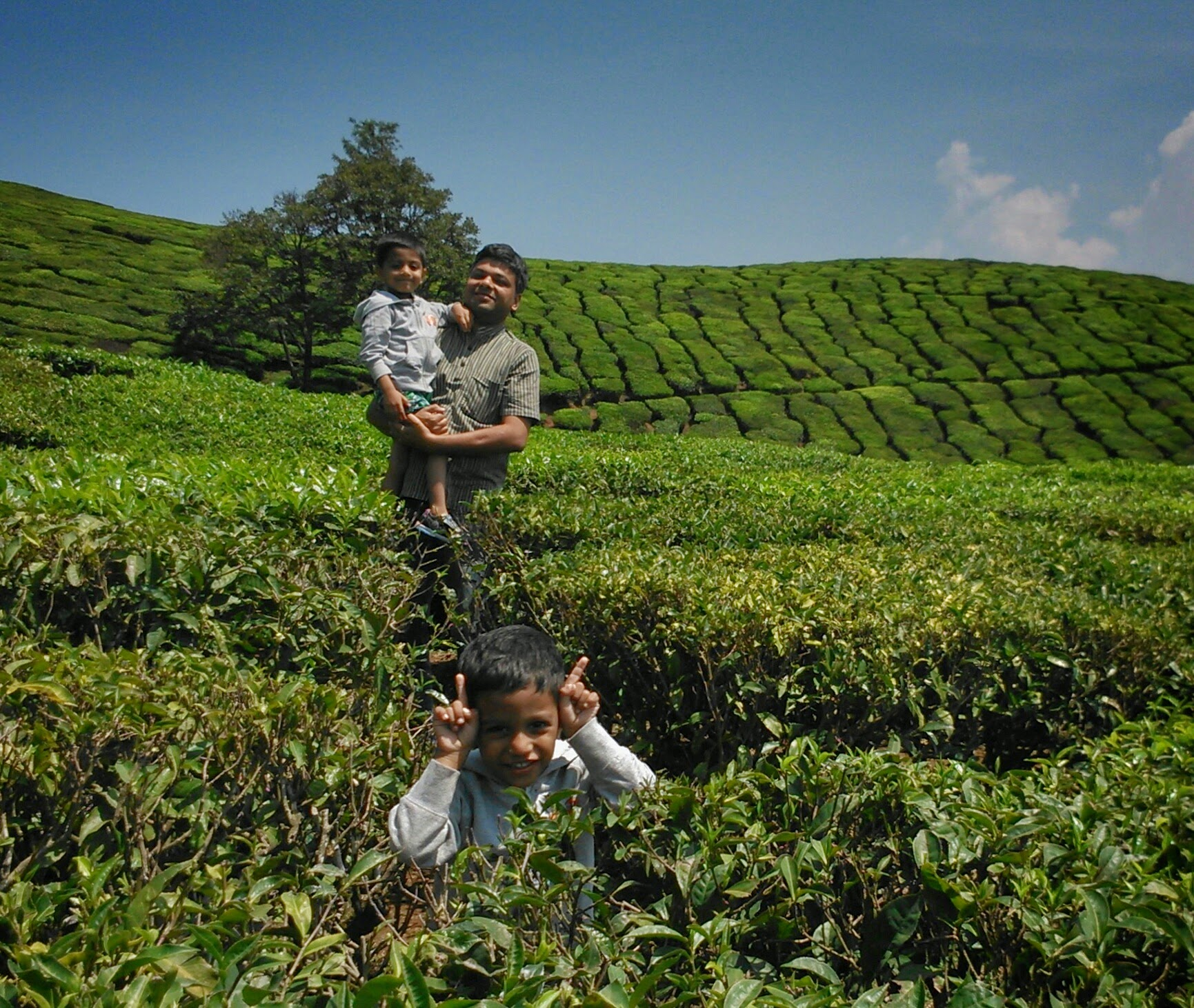 Munnar Tea Estate.JPG