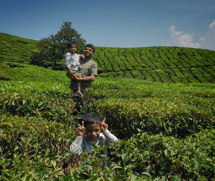 Munnar Tea Estate