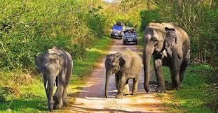 safari India.jpg