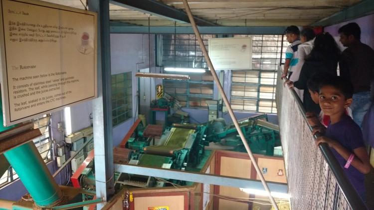 Tea factory tour.jpg