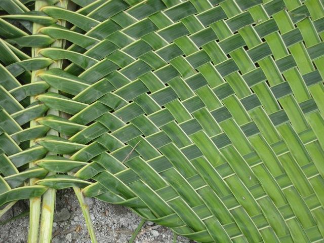 Image result for coconut leaf mat
