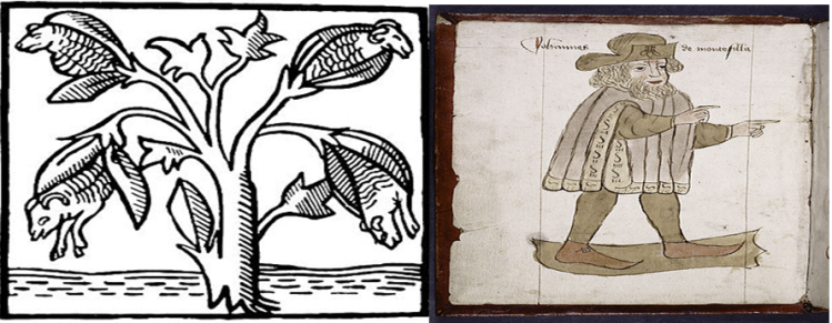 Sir John Mandeville and cotton.png