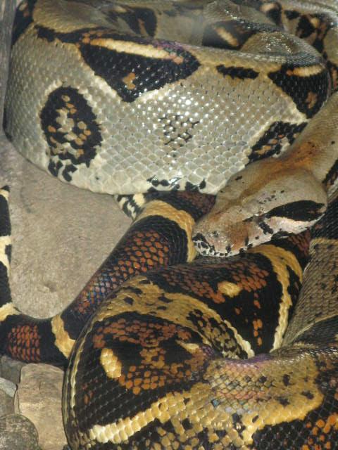 snake scales.JPG