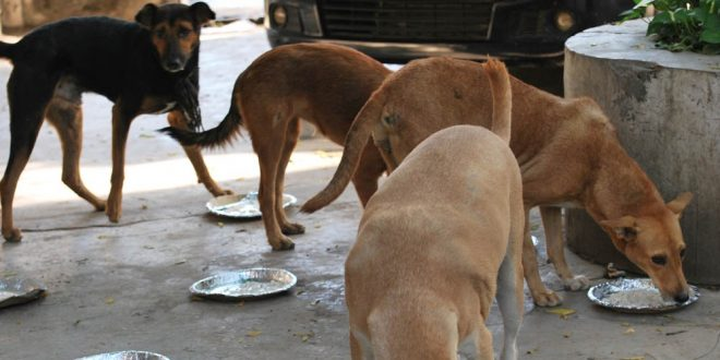 feeding stray dogs.jpg