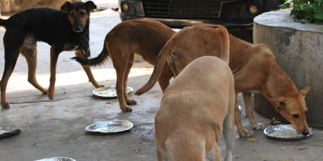 feeding stray dogs.jpg